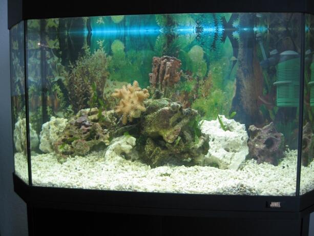 Gestaltung des Aquariums (Boden,Steine,Tiere) Kleines ...