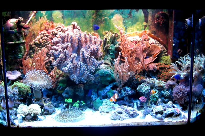 Aquarium Maerz 2012