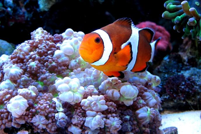 Kleines Meerwasseraquarium