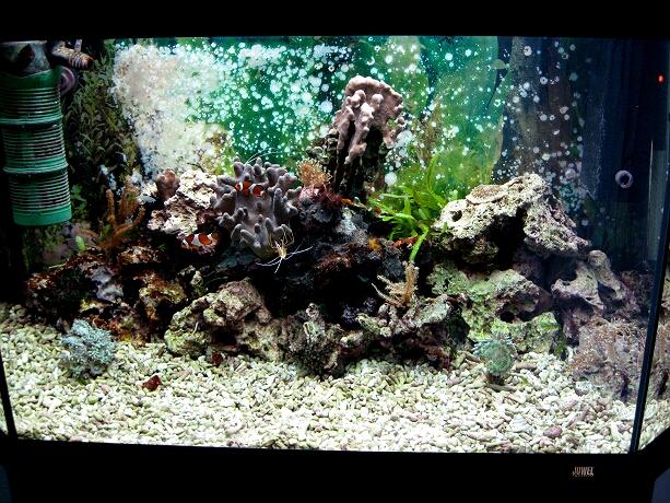 Gestaltung des aquariums boden steine tiere kleines for Boden aquarium