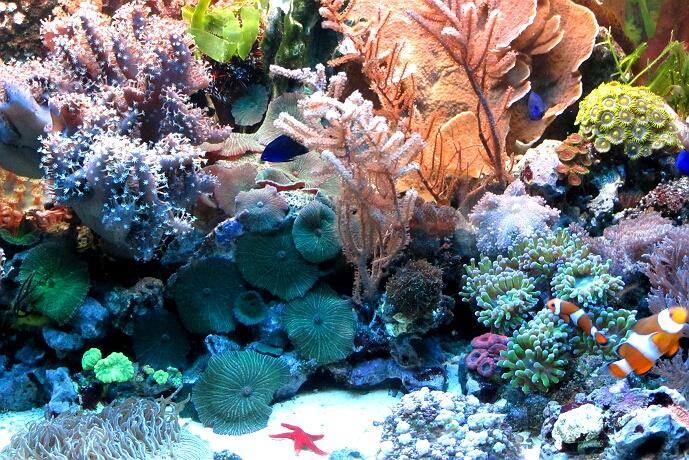 120 liter meerwasseraquarium verkaufe meerwasser aquarium. Black Bedroom Furniture Sets. Home Design Ideas