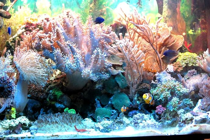 mein 130 l aquarium august 2009 2013 kleines meerwasseraquarium. Black Bedroom Furniture Sets. Home Design Ideas
