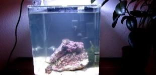 nano mit lebenden Steinen -11.Oktober 2012