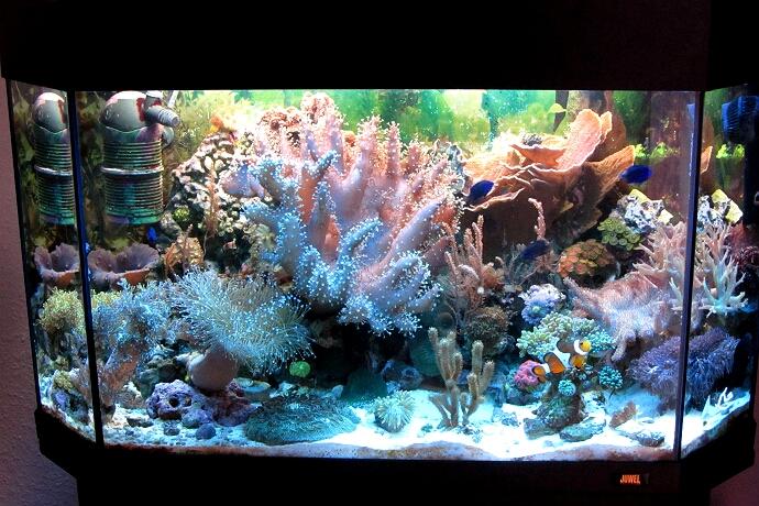 aquarium november 2012 kleines meerwasseraquarium. Black Bedroom Furniture Sets. Home Design Ideas