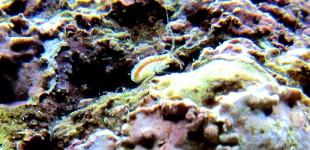 Flohkrebse gibt es zahlreich im Aquarium