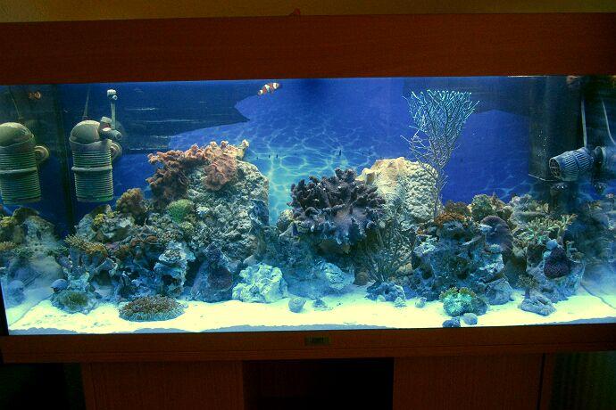 mein 180 l aquarium seit 2014 kleines meerwasseraquarium. Black Bedroom Furniture Sets. Home Design Ideas