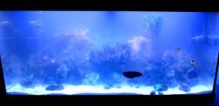 Die Fische durften nun auch ins Aquarium.