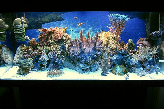 Mein 180 l aquarium seit 2014 kleines meerwasseraquarium for Salzwasser aquarium