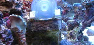 Futterklammer mit Saugnapf zum Befestigen von Algen
