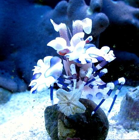 süßwasser quallen aquarium