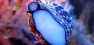 Schnecke frisst fleissig Algen von der Scheibe