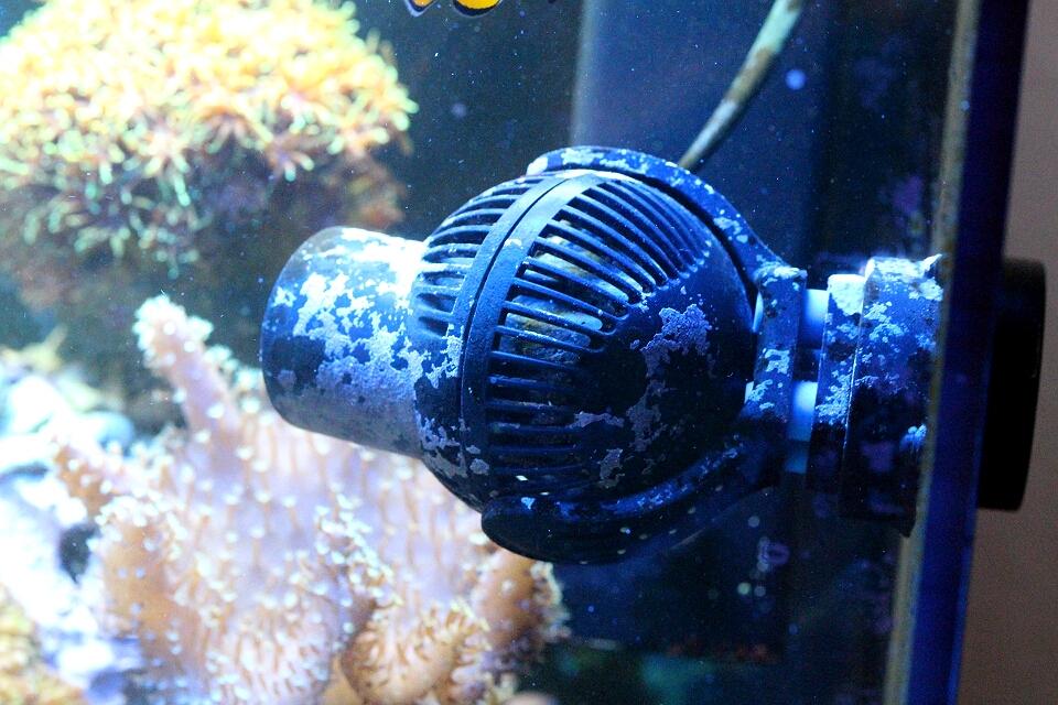 Unterschiedliche Haltungsbedingungen LPS und SPS Korallen – Kleines ...