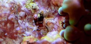 Foraminifere - nur wenige Millimeter groß
