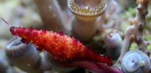 Spindelkauri und rechts sieht man den pinkfarbenen Fuss