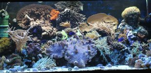 180 l Aquarium Juni 2016
