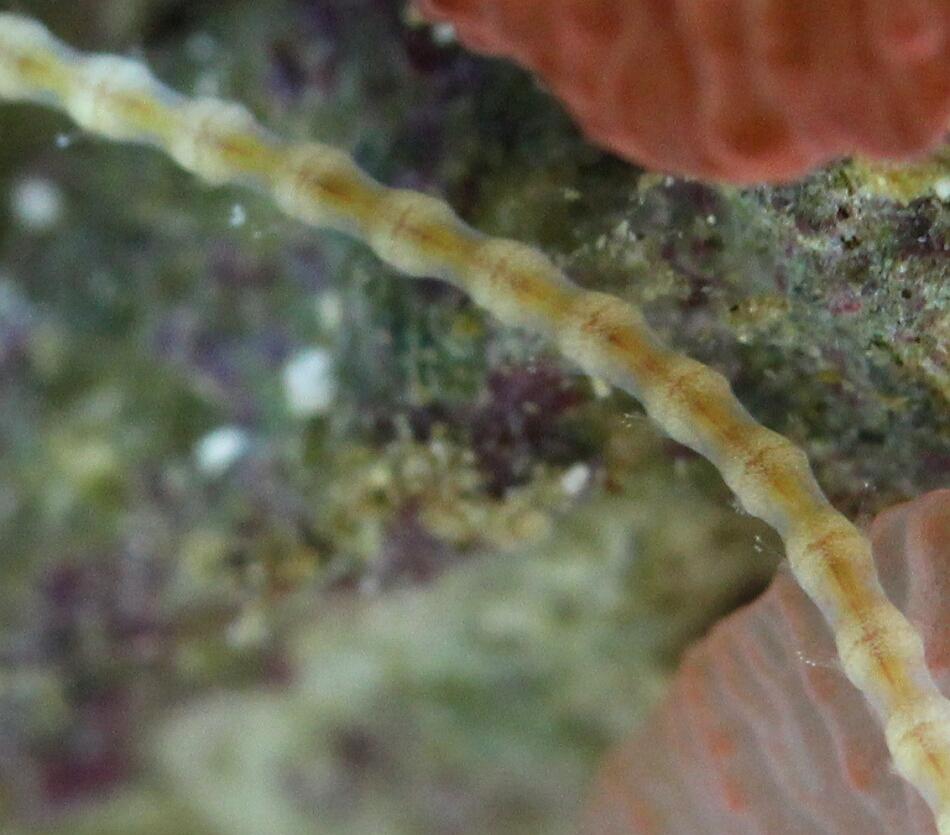 Der Bandwurm und der Wurm ein und auch